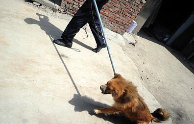 整治养犬.jpg